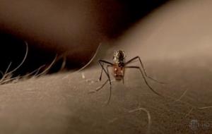 Solutions anti moustiques naturelles et efficaces