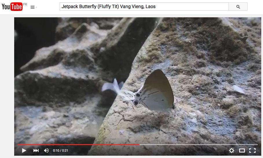 jetpack butterfly